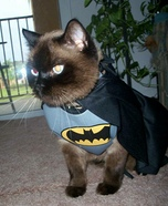 Romeo the Bat Cat Homemade Costume