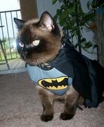 Romeo the Bat Cat Homemade Costume