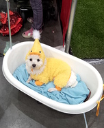 Rubber Duck Dog Costume