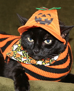Homemade Costumes for Cats