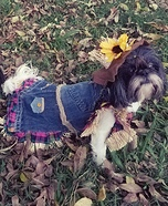 Scarecrows Dogs Homemade Costume