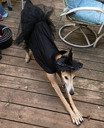 Scary Witch Dog Homemade Costume
