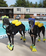 Creative costume ideas for dogs: Scuba Dogs Costume