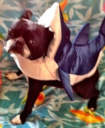 Jaws Shark Costume