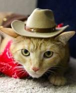 Sheriff Cat Homemade Costume