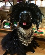Showgirl Dog Homemade Costume