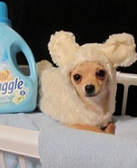 Creative costume ideas for dogs: Snuggle Bear
