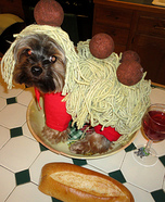 Homemade Spaghetti and Meatballs Costume for Dogs
