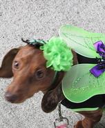 Spider Fairy Dog Homemade Costume