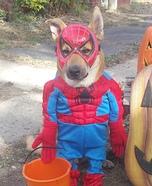 Spiderman Dog Costume
