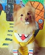 Spongedog Homemade Costume