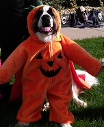 St. Bernard Pumpkin Homemade Costume