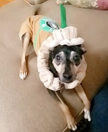 Starbucks Pup Homemade Costume