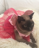 Sugar Plum Fairy Cat Costume