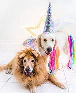 Sunshine the Unicorn and Lion Sidekick Dogs Homemade Costume