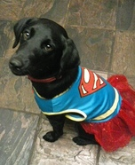 Super Abby Dog Costume