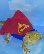 Bearded Dragon dressed as Superman