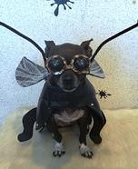 Super Fly Homemade Dog Costume