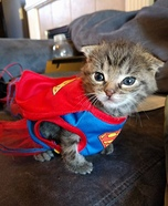 Super Kitten Cat Costume