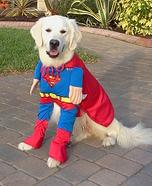 Superdog Costume
