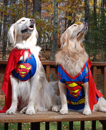 Superheroes Dogs Costume