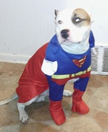Superman Dog's Costume