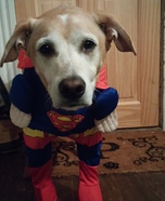 Superman Dog Halloween Costume
