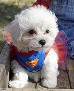 Superwoman Dog Costume