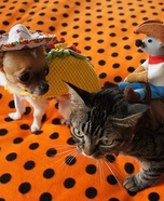 Taco Dog & Rodeo Cat Homemade Costume