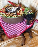 Taco Salad Dog Homemade Costume