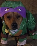 Teenage Mutant Ninja Dog Costume