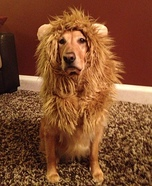 Creative costume ideas for dogs: Lion Dog Costume