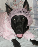The Big Bad Wolf Costume for Dogs