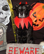 The Devil Dog Homemade Costume