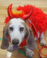The Devil Wears Prada Dog Homemade Costume