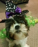 The Good Witch Dog Homemade Costume
