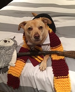 The Harry Potter Dog Homemade Costume