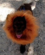 The Lion Dog Costume