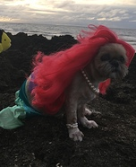 The Littlest Mermaid Dog Costume