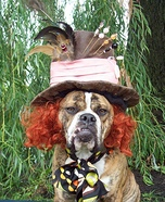 The Mad Hatter Dog Homemade Costume