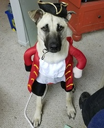 The Pirates Dogs Costume