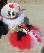 Creative costume ideas for dogs: The Queen of Hearts Dog Costume