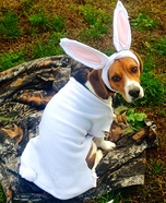 The Rabbit Dog Costume