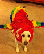 Creative costume ideas for dogs: The Red Macaw Dog Costume