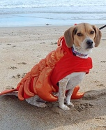 The Rox Lobster Costume