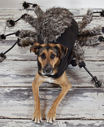 The Spider Dog Homemade Costume