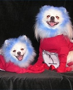 Creative costume ideas for dogs: Thing 1 and Thing 2