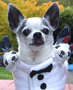 Creative costume ideas for dogs: Three Headed Chihuahua