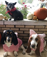Three Little Pigs and The Big Bad Wolf Dogs Homemade Costume