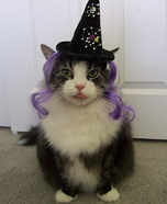 Costume Ideas for Cats
